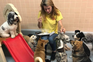 What to look for in a Doggie Daycare and BoardingProvider