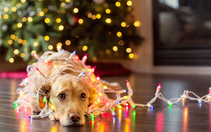 Pet safety tips for theholidays